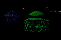 Longwood Gardens Nightscape